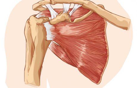 האנטומיה של הכתף